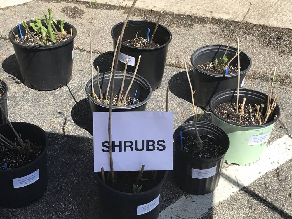 Image of: Death to Shrubs