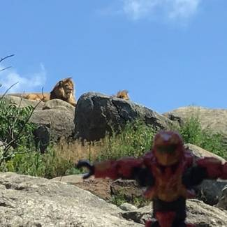 Image of: T-Pose Tuesday: Zoo dominance