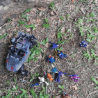 Image of: Drone Hive Attack Part 1