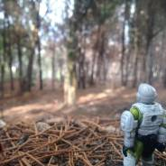 Marine in the forest