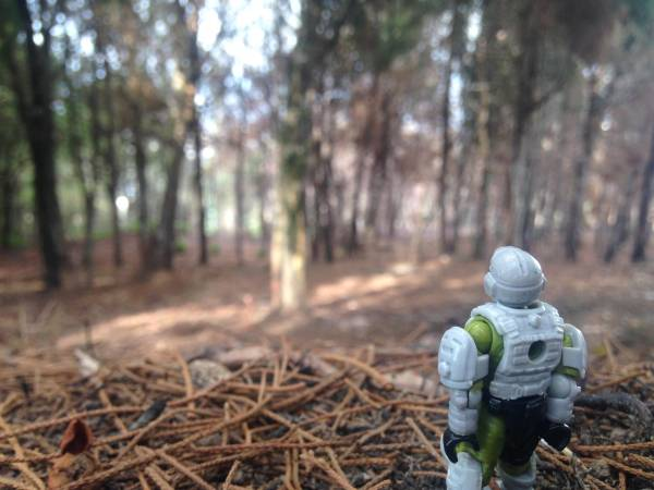 marine-in-the-forest