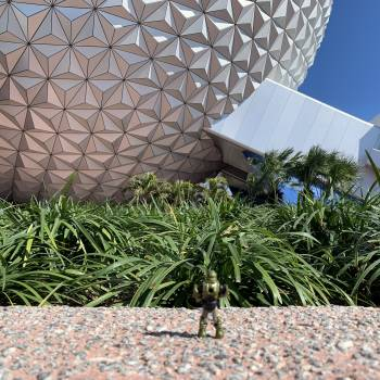 Wade Elk's Trip to Epcot
